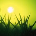 Les biocarburants n'ont pas dit leur dernier mot