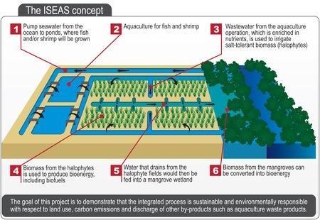 La ferme réutilise les déchets d'une usine d'aquaculture (photo © Boeing)